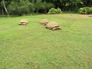 A proximité du restaurant, retrouvez quelques tortues