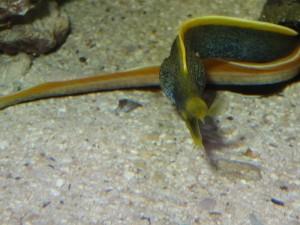 Aquarium de Maurice 1