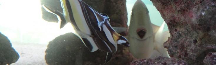 Aquarium de Maurice 2