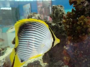 Aquarium de Maurice 3