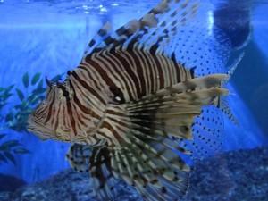 Aquarium de Maurice 4