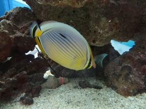 Aquarium de Maurice 5